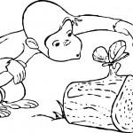 Dibujo para colorear mono con mariposa