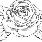 Dibujo para colorear rosa preciosa
