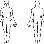Dibujo El cuerpo humano 1494342142