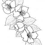 Dibujo flores 1494372637