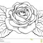 Dibujo flores 1494372667