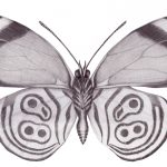 Dibujo Mariposas 1499468557