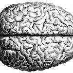 Dibujo Cerebro 1507024686