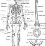 Dibujo Esqueletos 1507019784