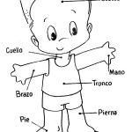 Dibujo El cuerpo humano 1494342145