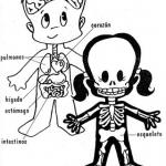 Dibujo El cuerpo humano 1494342173
