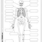 Dibujo El cuerpo humano 1494342179