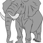 Dibujo Elefantes 1495031214