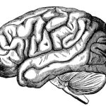Dibujo Cerebro 1507024713