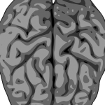 Dibujo Cerebro 1507024752