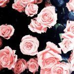 Dibujo rosas 1510748652